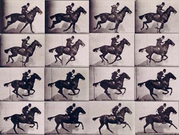 horses through time olsen s andra l