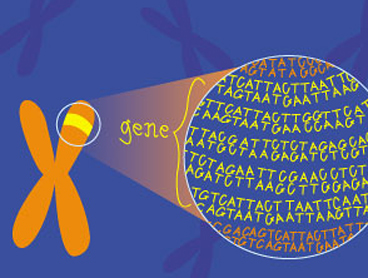 Genetics For Kids Ology Amnh