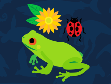 drawing of a frog, ladybug and flower