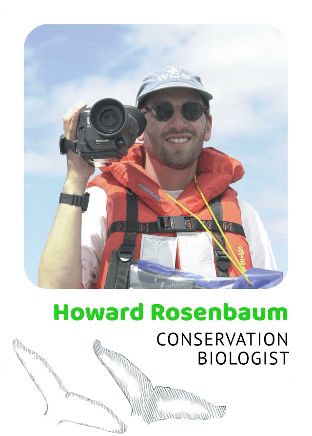 Photo of Howard Rosenbaum, Conservation Biologist and a drawing of humpback flukes