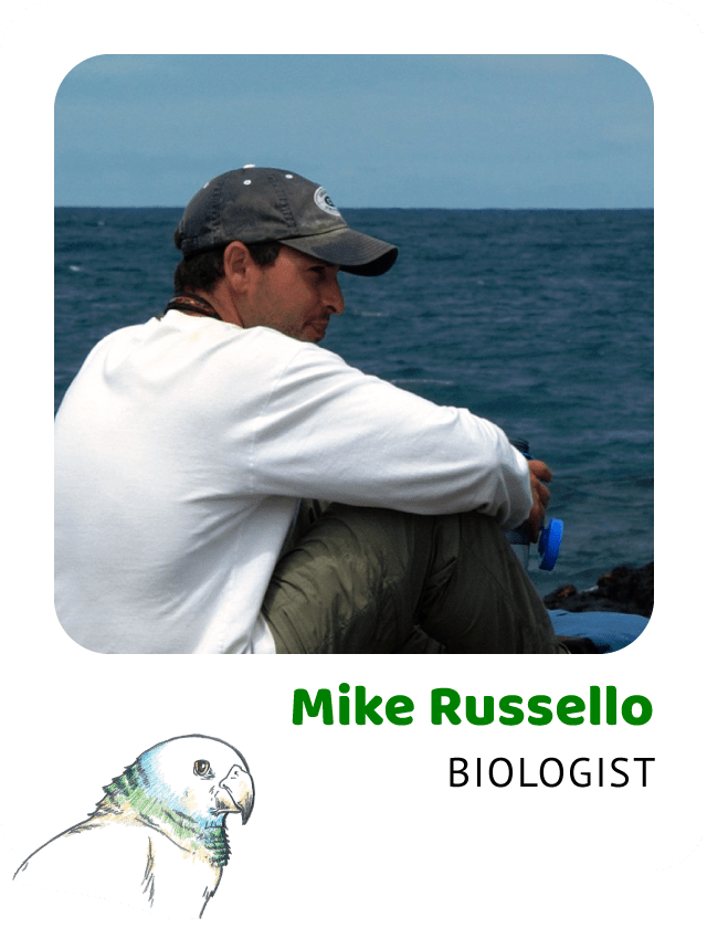 Photo of Mike Russello, Biologist and a drawing of a St. Vincent parrot