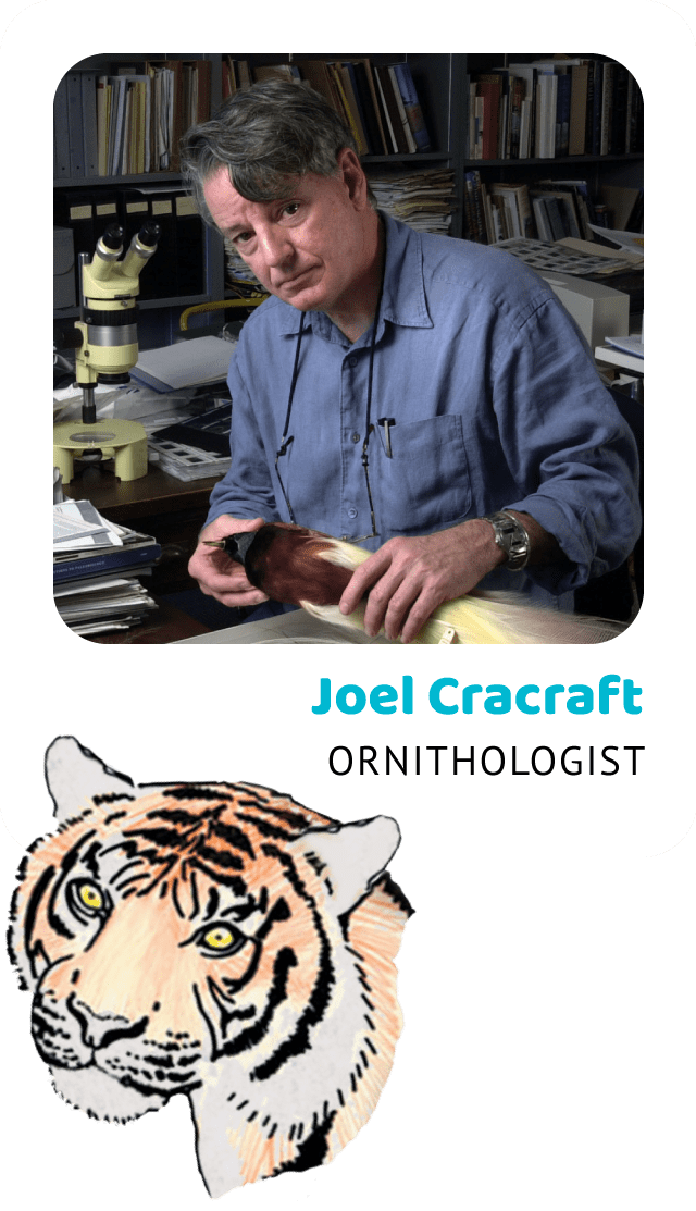 Photo of Joel Cracraft, Ornithologist and a drawing of a Sumatran tiger