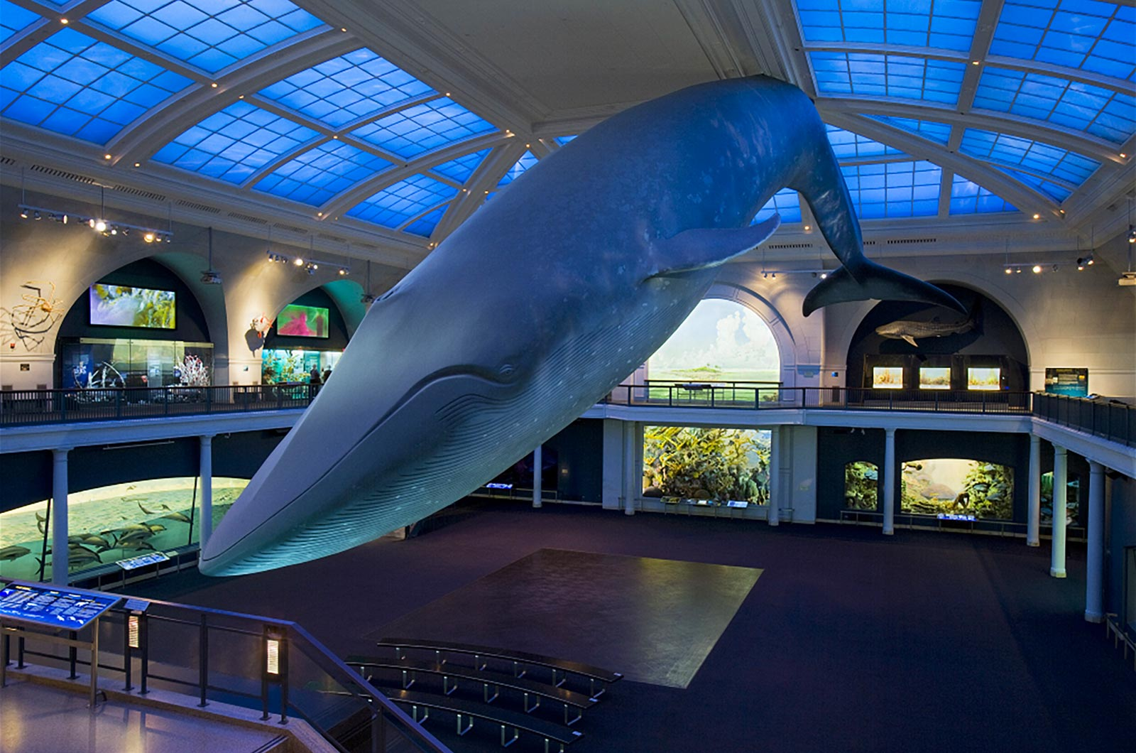 Whale in Hall of Ocean Life