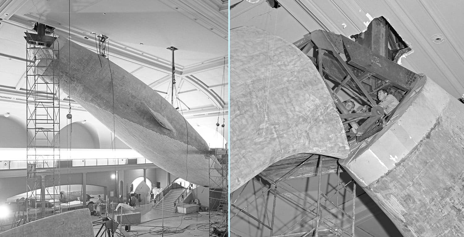Early photo showing whale being constructed, along with a closeup of the support pipe