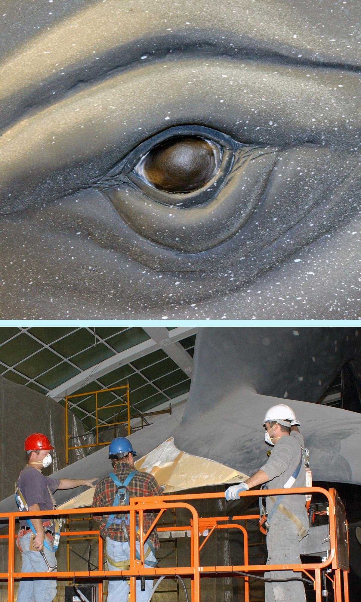 Workers inspecting tail of blue whale model during renovation.