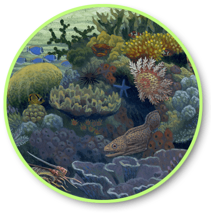 button link to Coral Reef