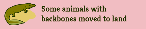 """Some animals with backbones moved to land"""