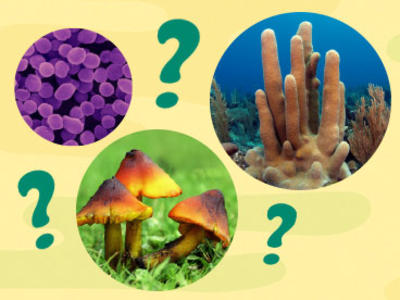 Images of Microbes, mushrooms and coral among large question marks