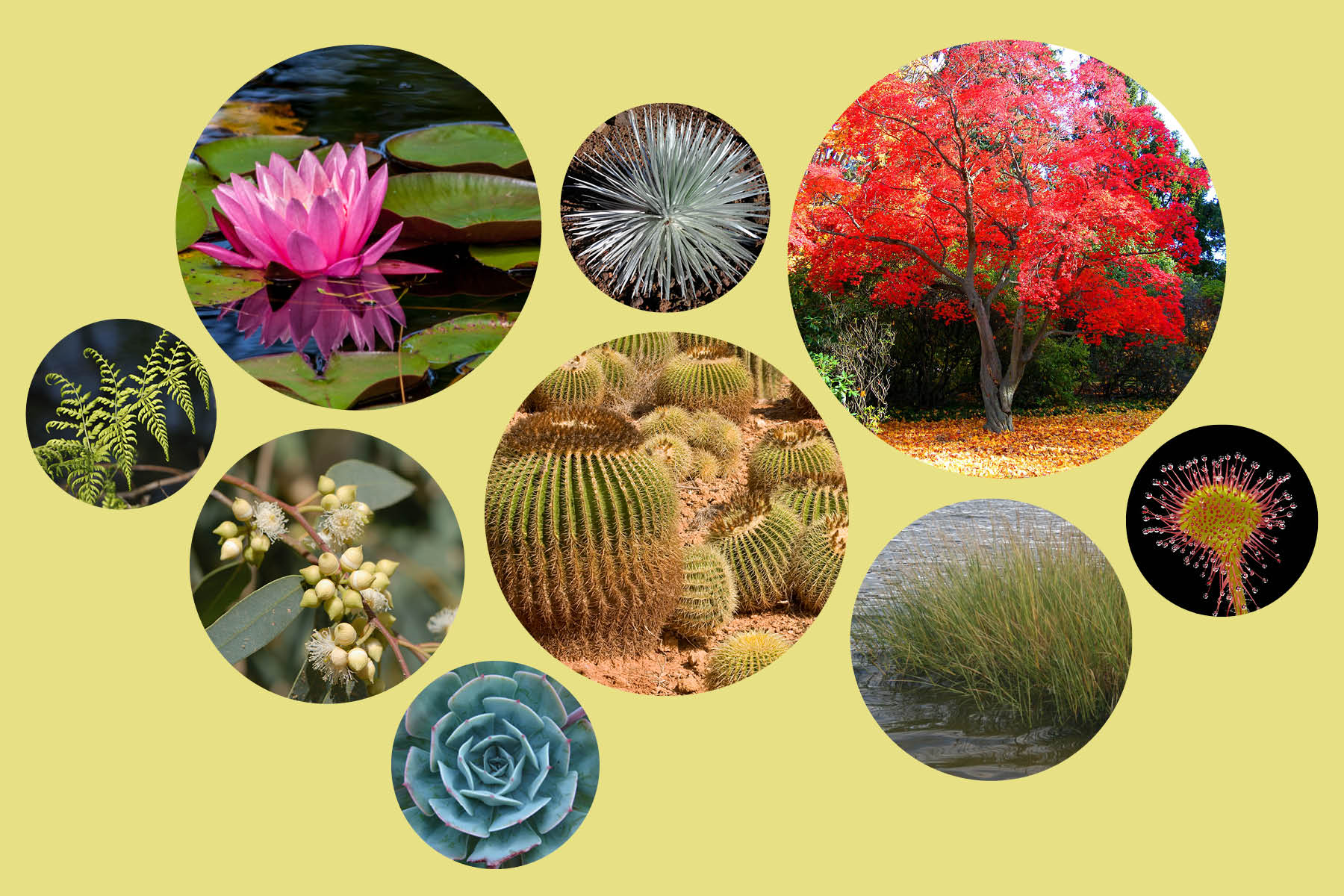 Nine examples of plants, including; ferns, succulents, cacti, water lilies, grasses and more.