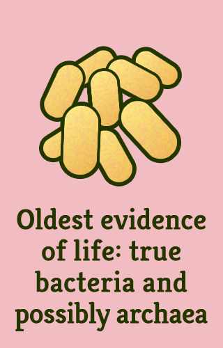 """Oldest evidence of life: true bacteria and possibly archaea"""