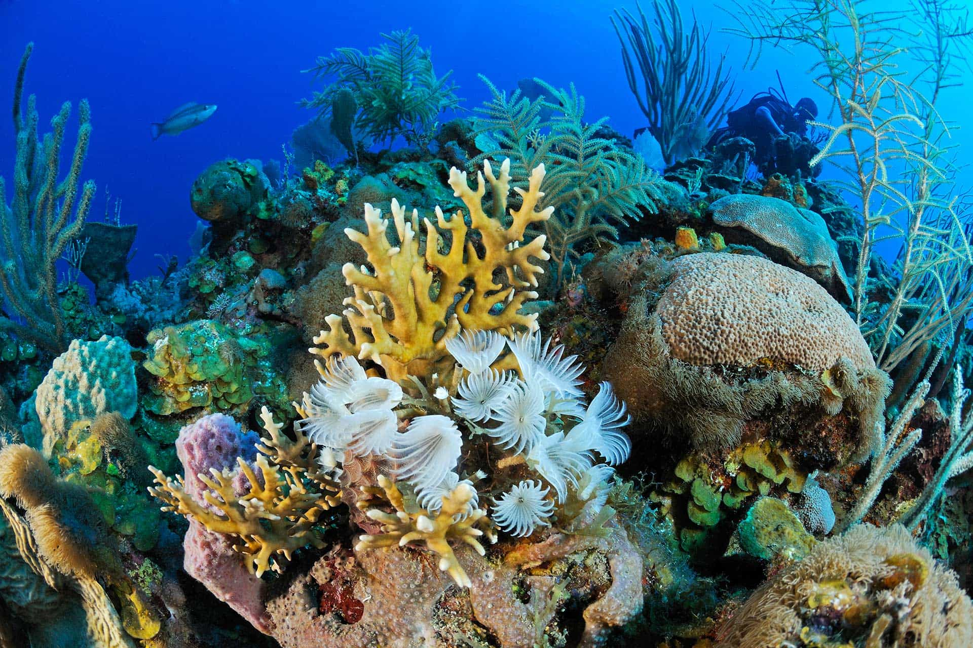 underwater scene with a colorful variety of corals, anemones, and fish