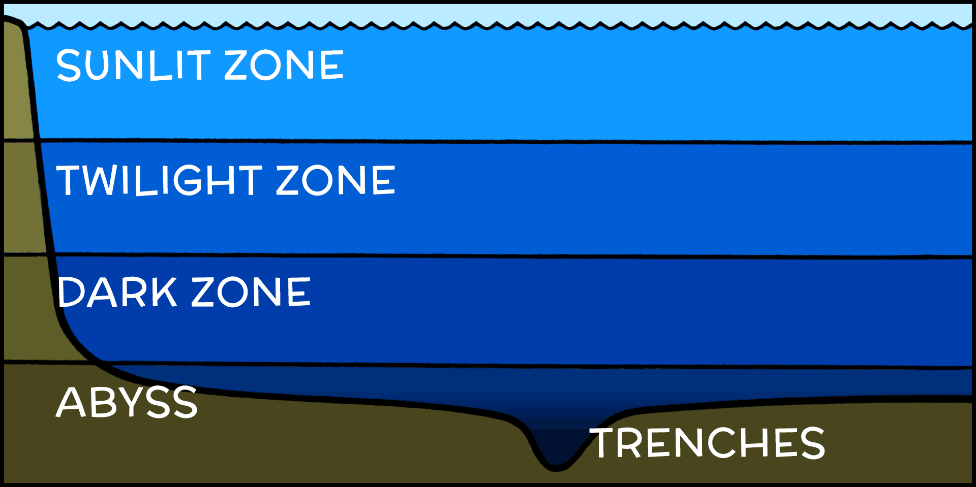 vertical cross-section of the ocean showing the zones