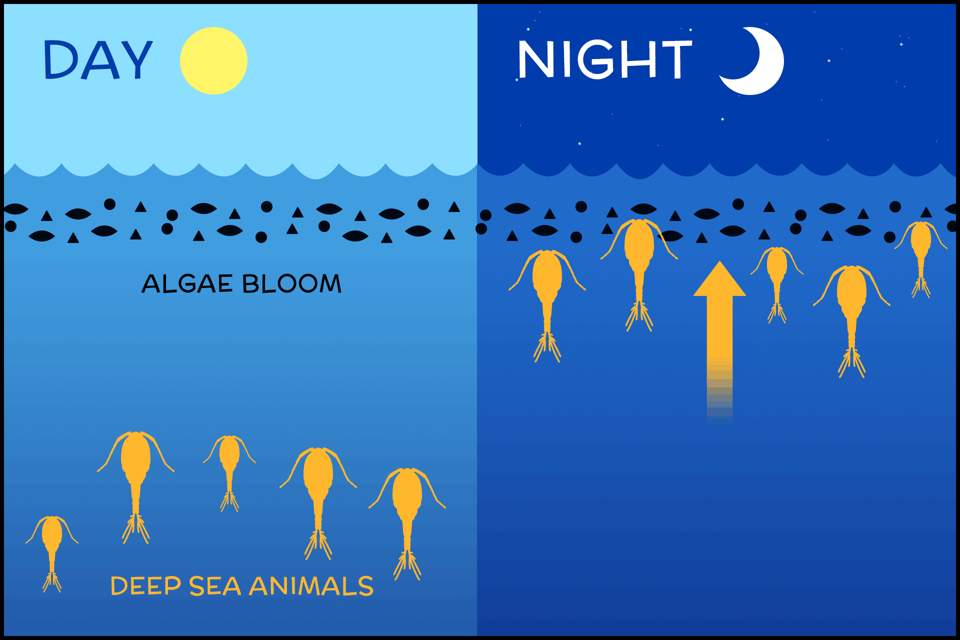 diagram with daytime ocean on left, showing animals in the depths, and nighttime ocean on right, showing animals near surface
