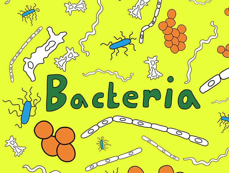 listing_coloring_bacteria