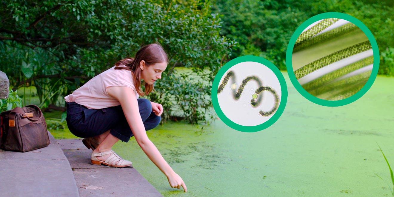 Sally Warring crouching near a pond, with two inset photos of several long microbes and one spring-like microbe