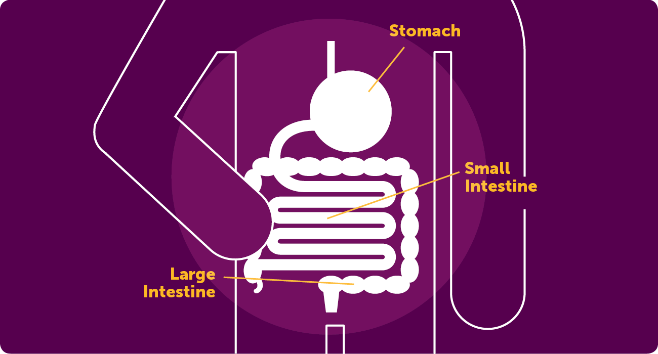 Icon of the digestive system, with labels for the stomach, large and small intestine.