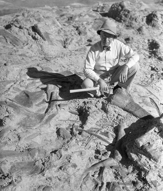 Barnum brown crouched in front of partially excavated dinosaur fossils.