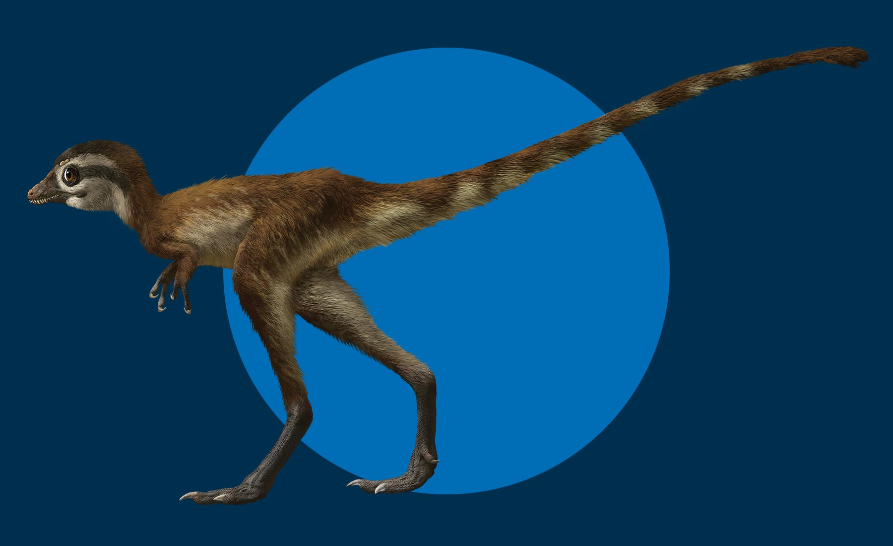 T. rex hatchling with long thin legs and large eyes
