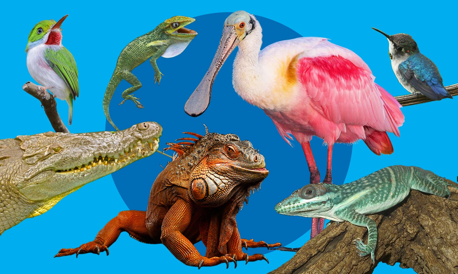 Seven reptiles and birds collaged together.