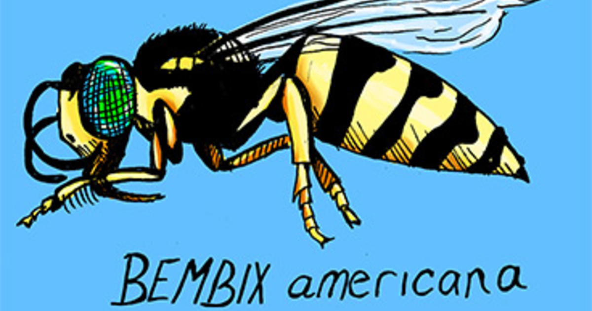 Issue 2 An Interview With Bembi Amnh