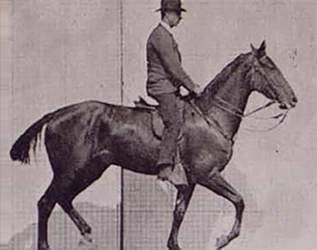 side view of man riding a trotting horse
