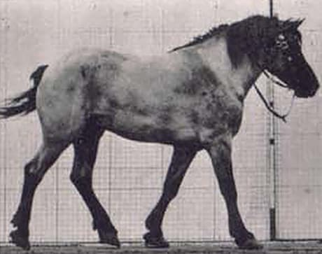 side view of walking horse