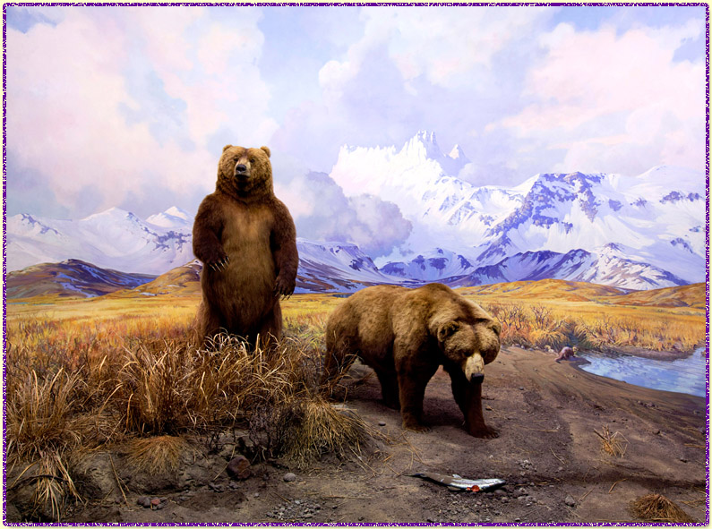 alaska brown bear AMNH diorama