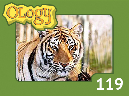 olc_119_bengal_tiger_listing