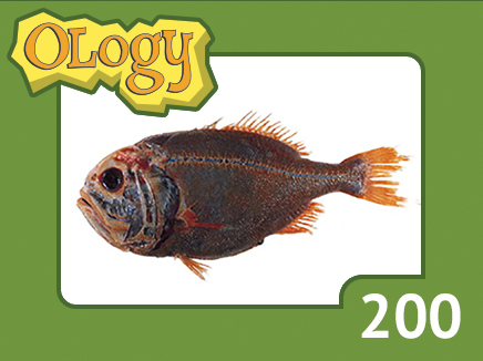 olc_200_orange_roughy_listing