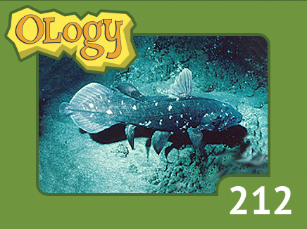 olc_212_coelacanth_listing