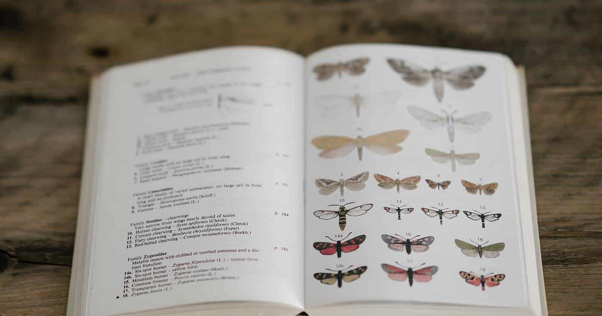 a peterson field guide to insects america north of mexico