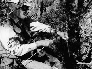 Gordon Jacoby extracting a core from a white spruce tree near the treeline in Alaska. One can see the core sample on the extractor coming out of the tree between his two hands. Only a small hole is left in the tree. It fills with sap and heals in one or two growing seasons. Photo courtesy of Gordon Jacoby.