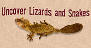 "Text reads: ""Uncover Lizards and Snakes"" above a lizard with an oval shaped tail."