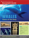 whales-ed-guide-sm-thumb