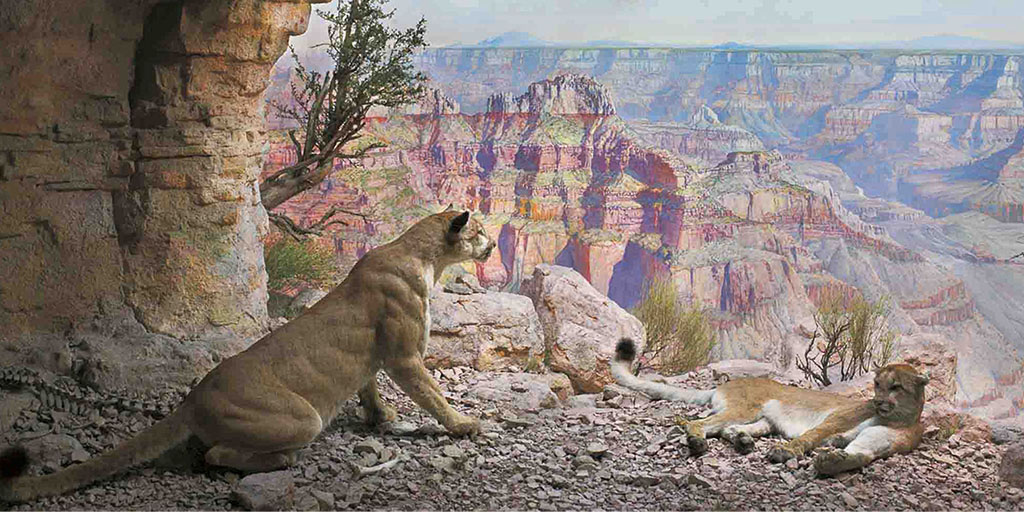Digital Backgrounds for Meetings: Dinosaurs and Dioramas   AMNH