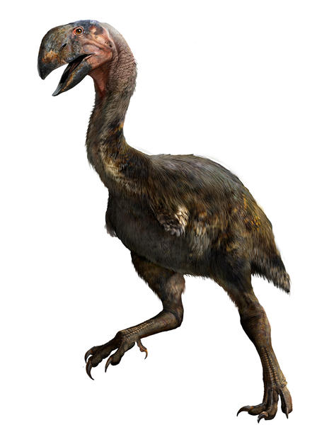 Gastornis gigantea illustration