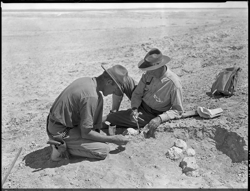 Roy Chapman Andrews and Walter Granger wear hats and sit on the sand, using brushes and chisels to extract fossils from the desert.