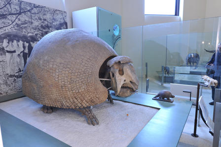 This glyptodont fossil is on display in the Museum's Hall of Primitive Mammals. © AMNH/ D. Finnin