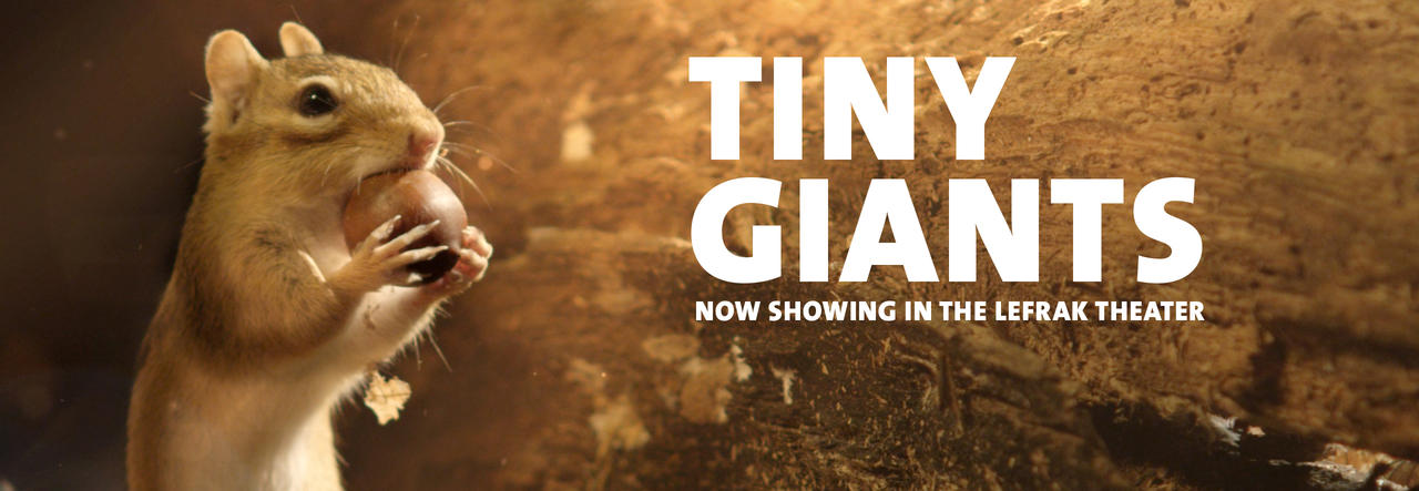 tinygiants_homepage_V1