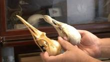 Inside the Collections; Ornithology