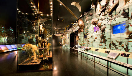 The Hall of Biodiversity presents a vivid portrait of the beauty and abundance of life on Earth. ©AMNH