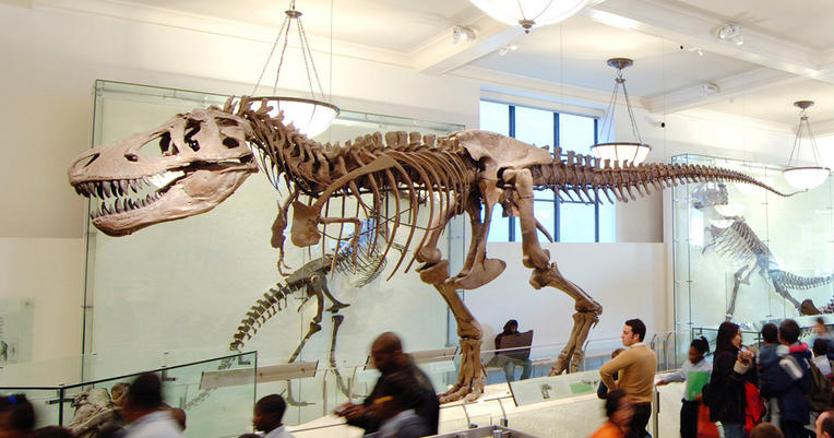 American Museum Of Natural History Special Exhibition