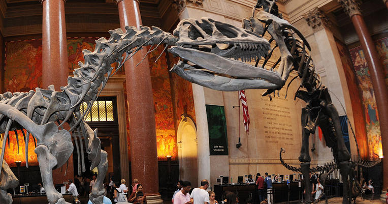 Natural History Museum Nyc Free Admission Day