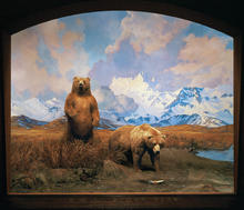 Two alaskan brown bears stand next to a stream in the Alaska Brown Bear Diorama
