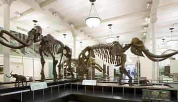 Early Relatives of Elephants
