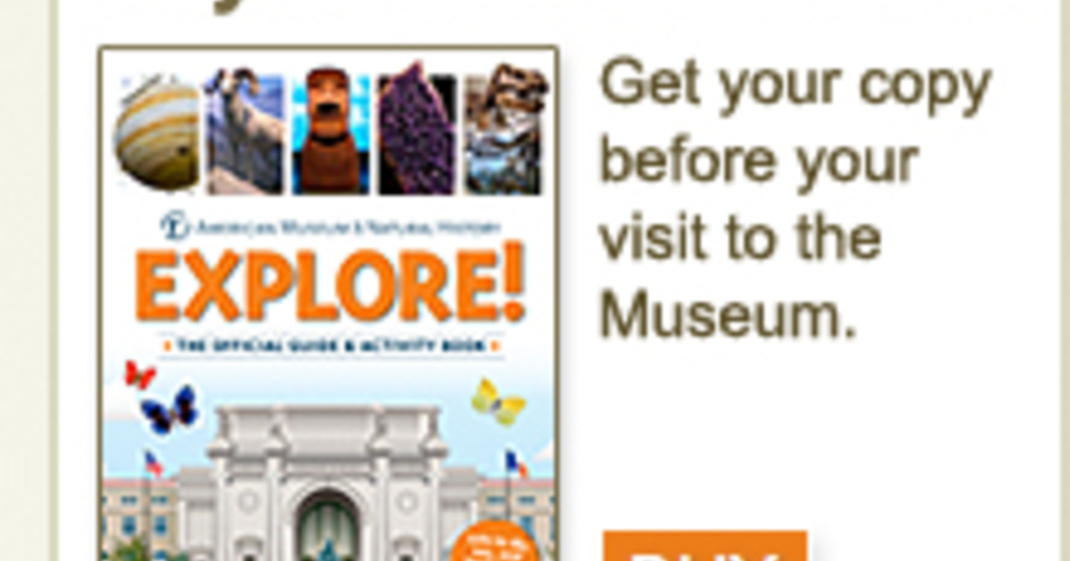 Kids Guide To The Museum Amnh