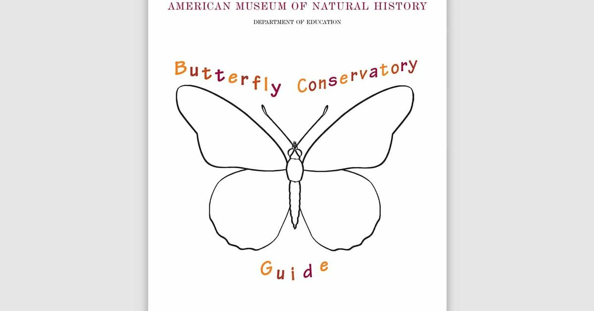 Educator Resources: The Butterfly Conservatory | AMNH