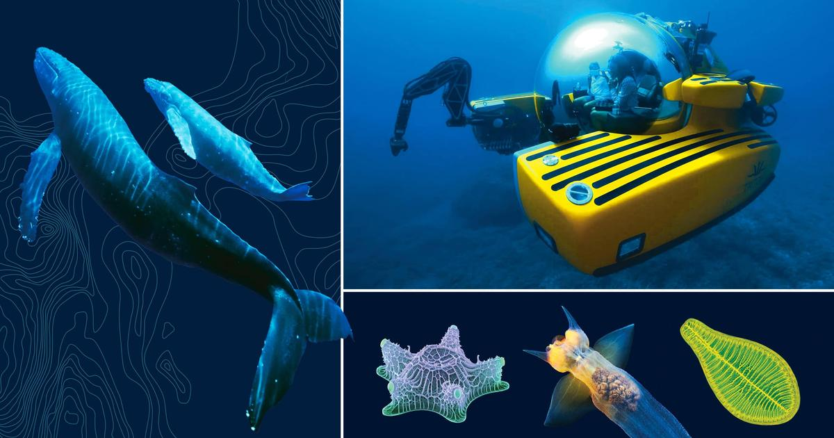 Resources For Educators: Unseen Oceans | AMNH
