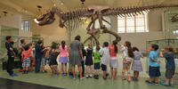 A School Group observing the Tyrannosaurus rex fossil