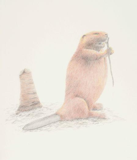 beginner animal drawing